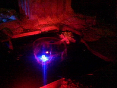 An Illuminated frog on a lilly pad