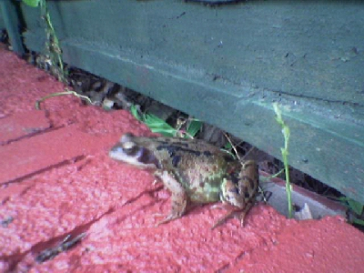 Mr Toad comes to visit