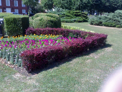 Flowers on Parkway ... July 2006