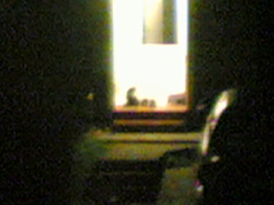 cat intruder (sorry but it was digital zoom at night)